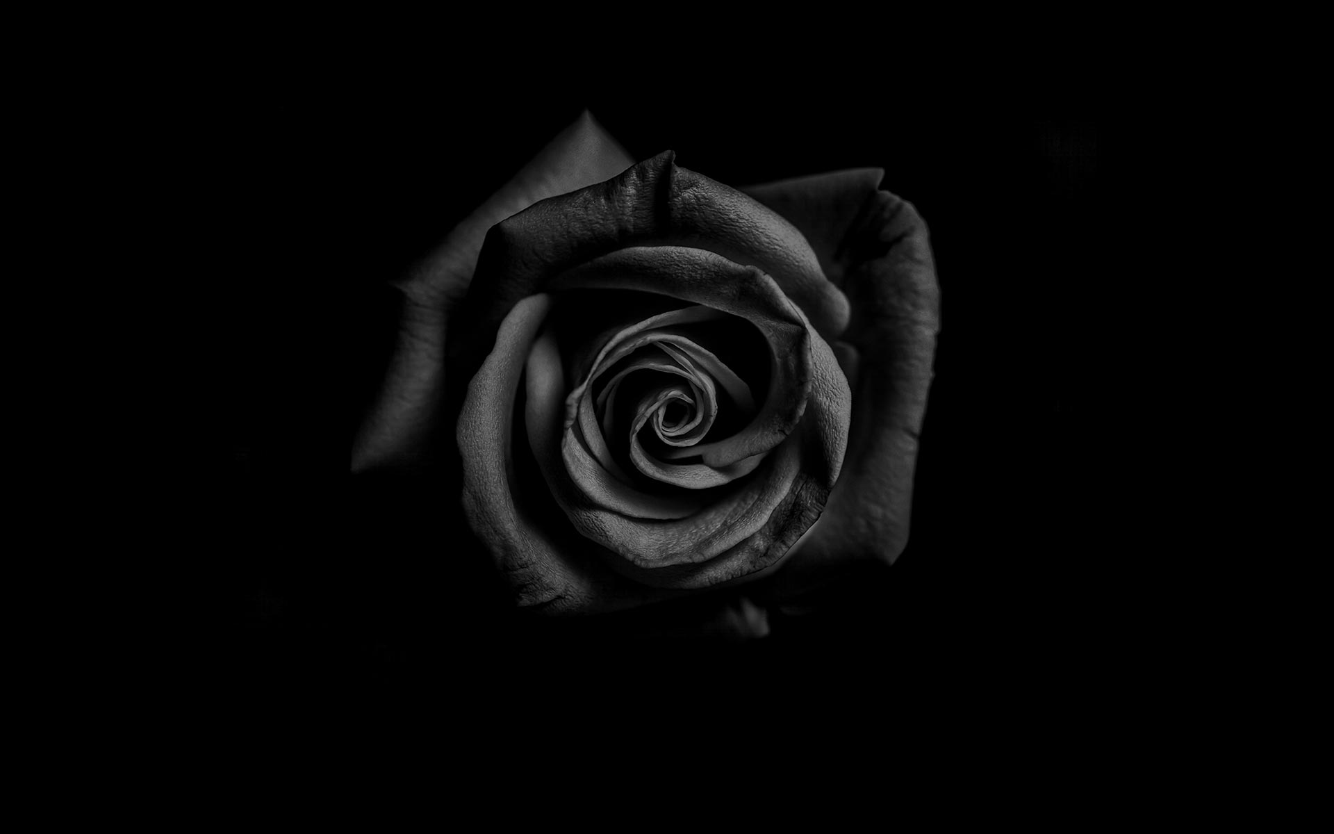 funeralhome-rose-bg